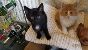 Wilbur and Cicero